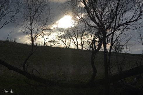 dark pasture