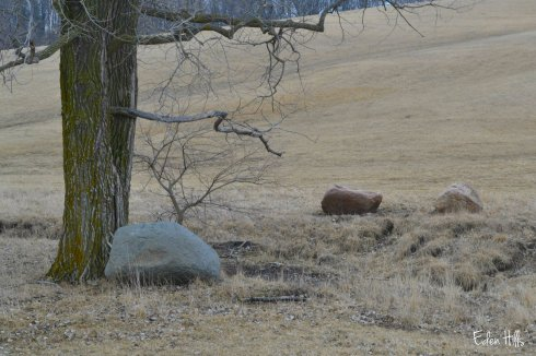 rocks in pasture