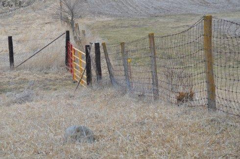 gates between fields