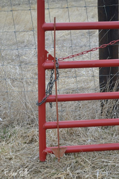 red cattle gate