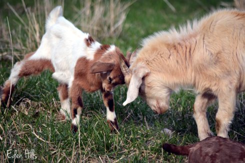 BB (Bambi's Buck) and Moose