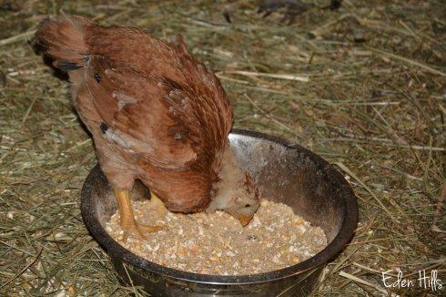 Chick 107aw