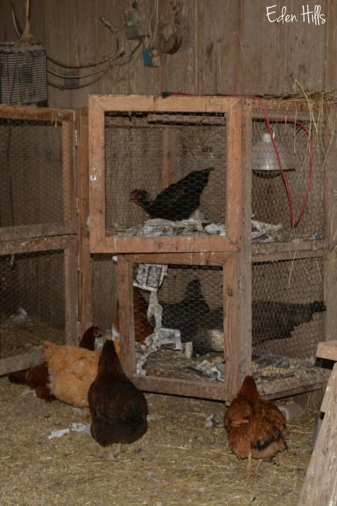 chick pen 115aw