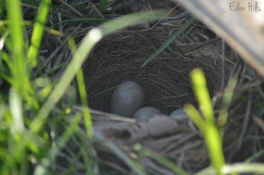 Thrasher Nest 195aw
