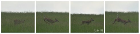 fawn collage