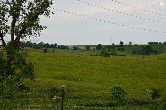 Pasture 53w