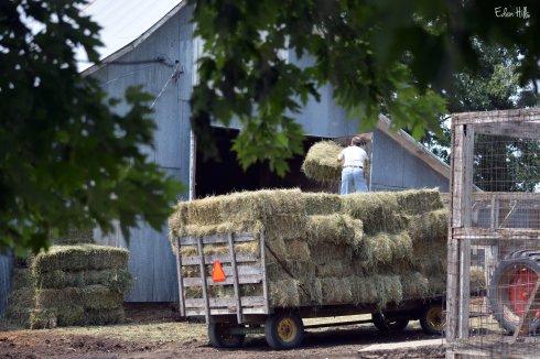 Unloading hay rack