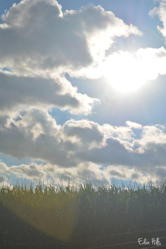 Sun 130ew