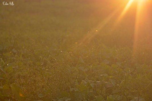 sun drops 25ew