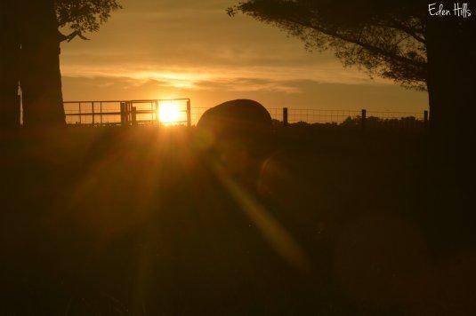 Sunset 11aw