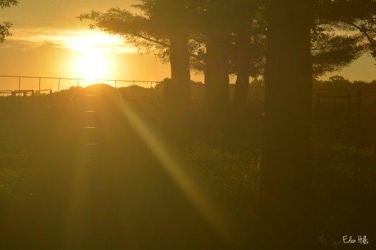Sunset 4aw