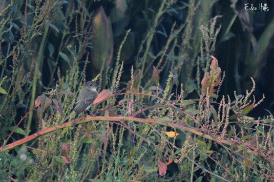 Bird on a weed