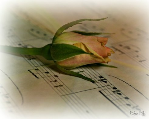 Musical Rosebud