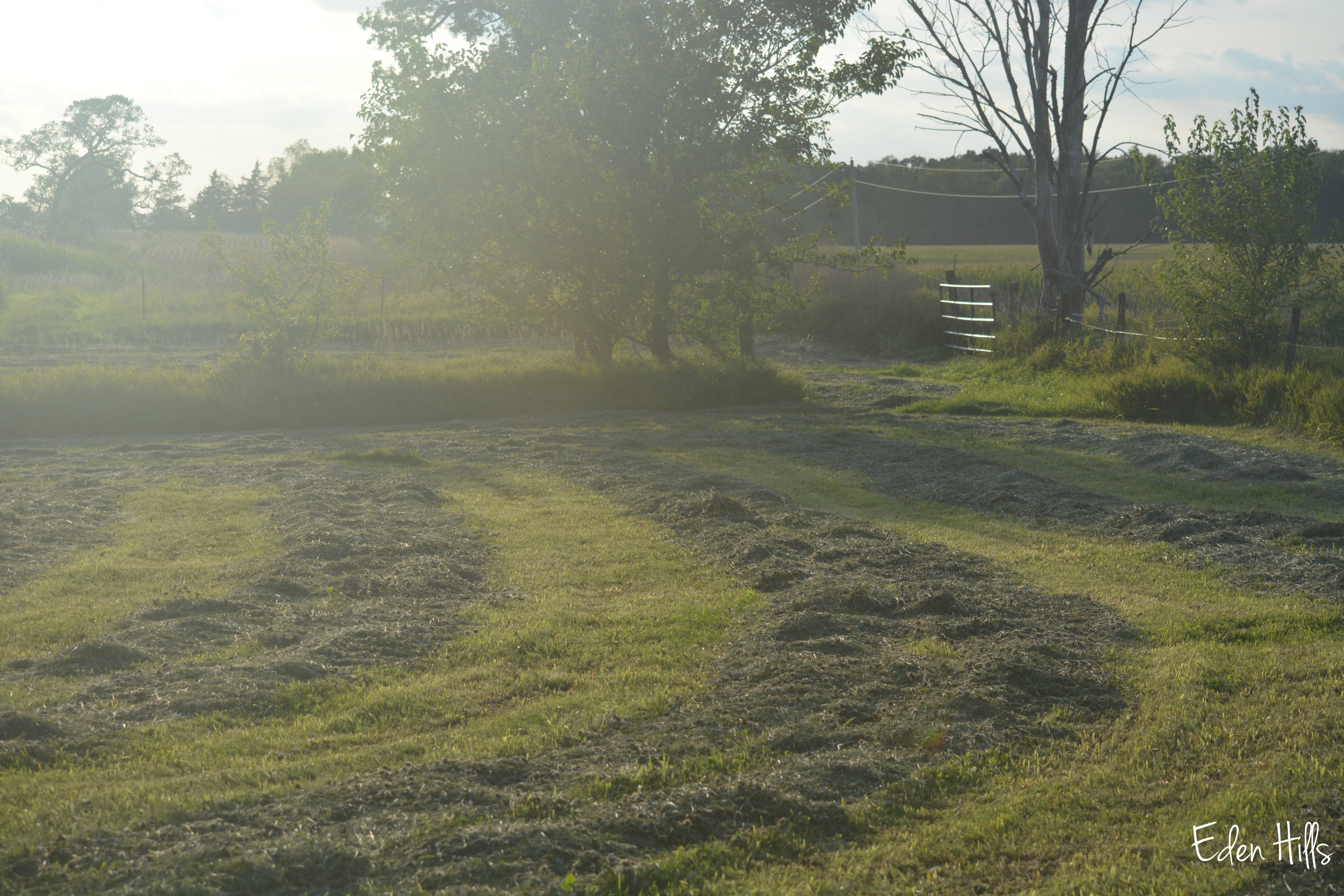 18 September 2014 Eden Hills