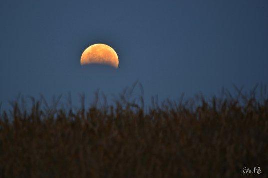 Blood Moon over corn