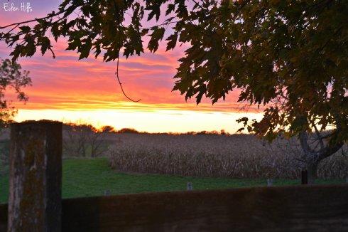 Sunset Fence