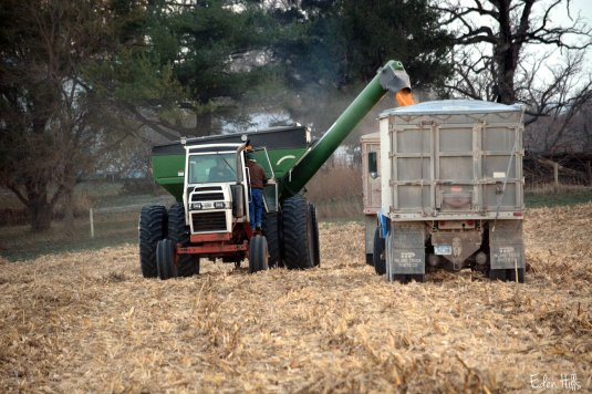 Corn transfer
