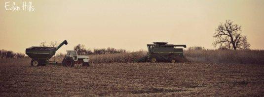 Harvest Timeline 147w