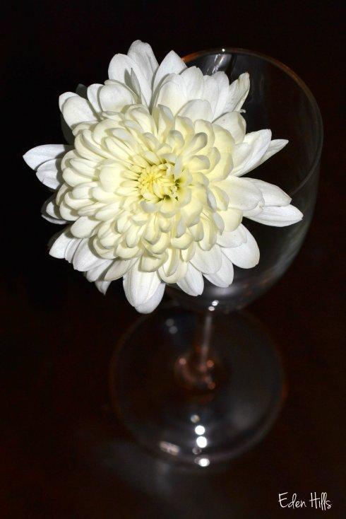 Flower 010ew