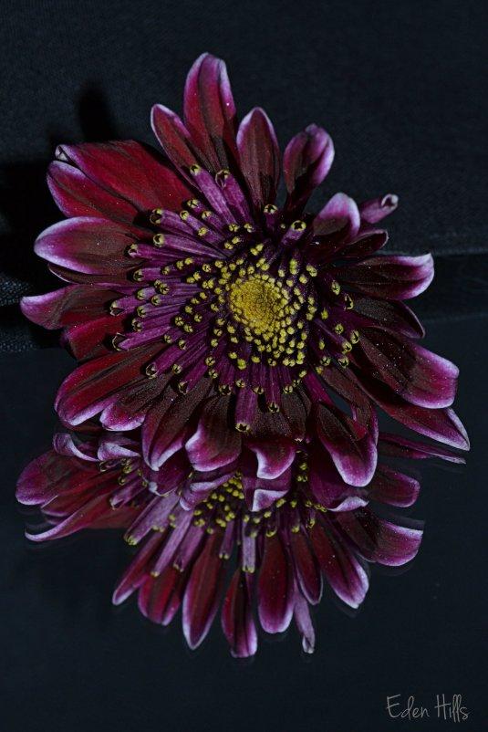 Flower 083ew