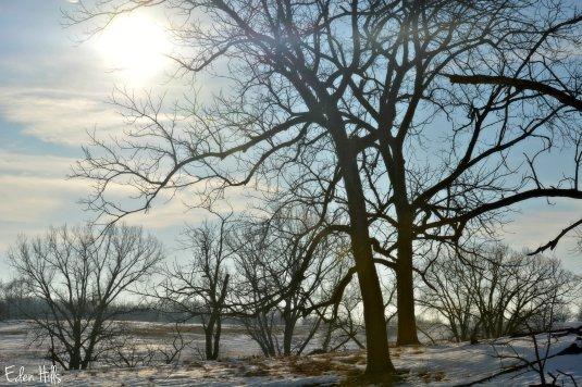 Pasture Sunshine