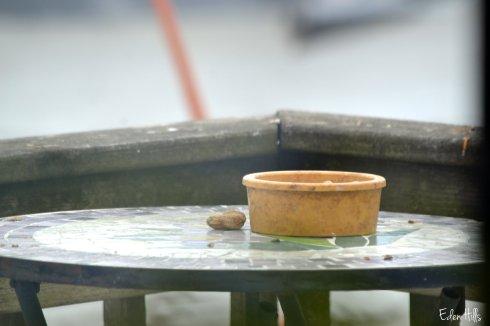 peanut bowl 019ew
