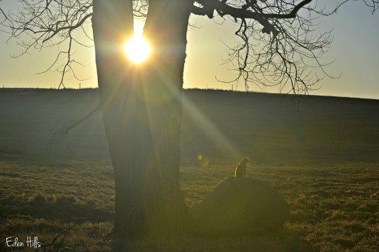 Cat Sunflare