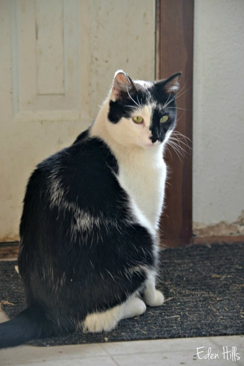 cat by door_0018ew