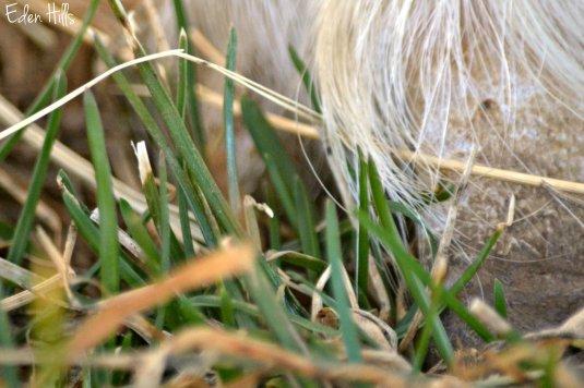 Grass under  hoof