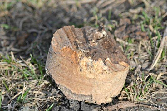 Tree hole_0023ew