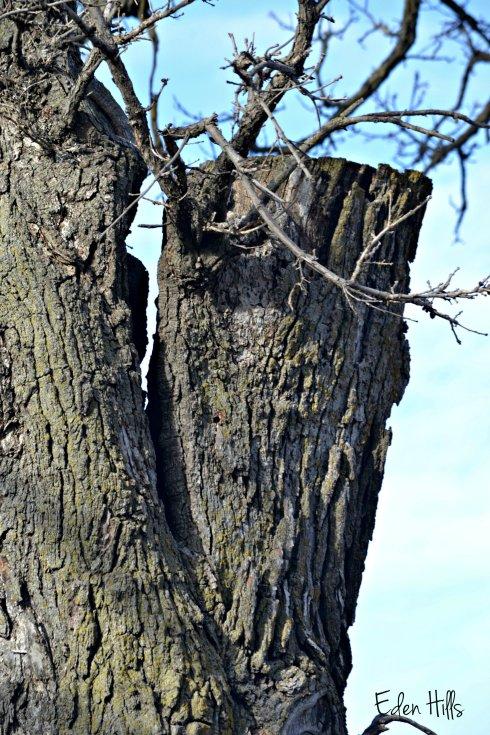 Tree_0021ew