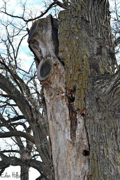 Tree_0022ew