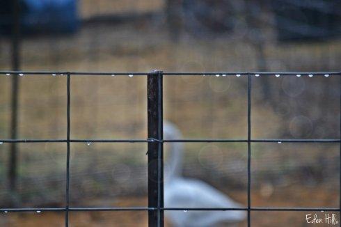 raindrop fence_0002ew
