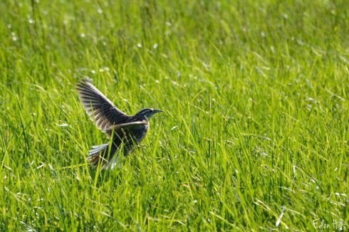 Bird_9286ew
