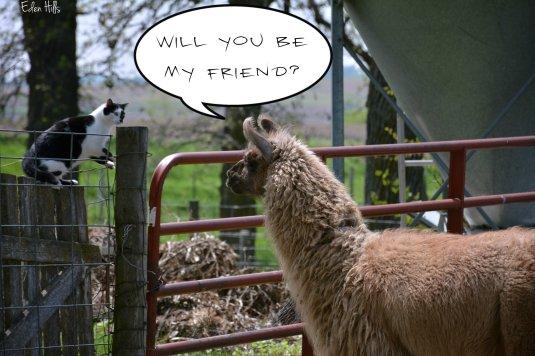 cat llama_8728ew
