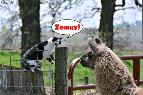 cat llama_8729ew