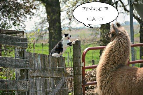 cat llama_8737ew