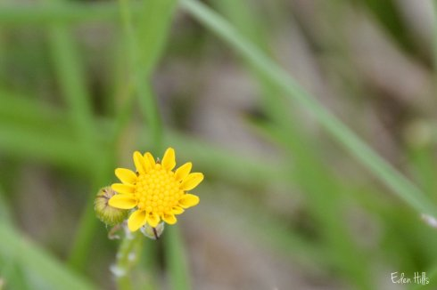 Flower_9320ew