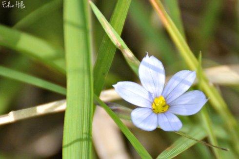 flower_9395ew
