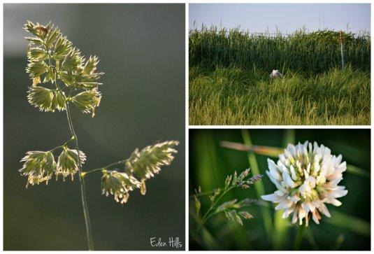 Grass collage w