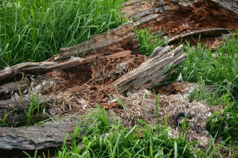 destroyed goose nest