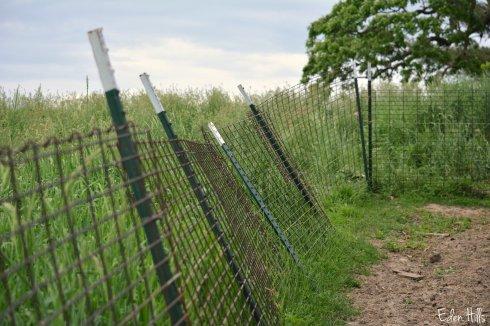 panel fence_0640ew