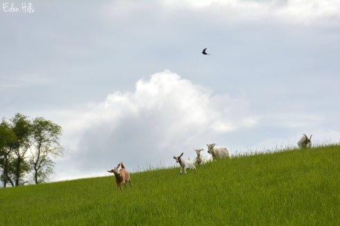 Pasture_9425ew