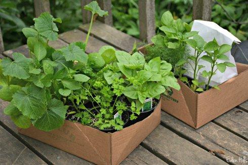 Plants_0300ew