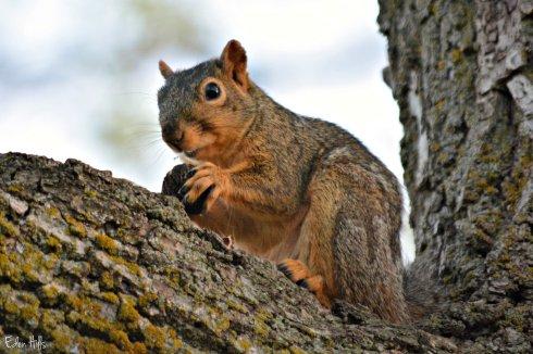 Squirrel_0201ew