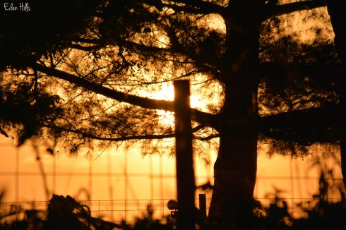 sunset fence_0171w