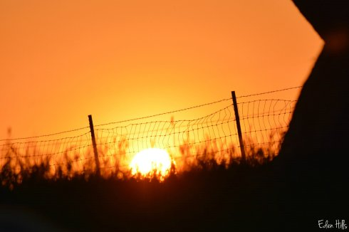 sunset fence_0227ew