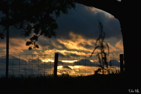 Sunset Fence_9977w