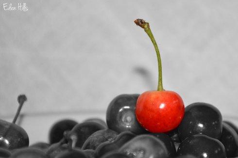 Cherry_1723ew