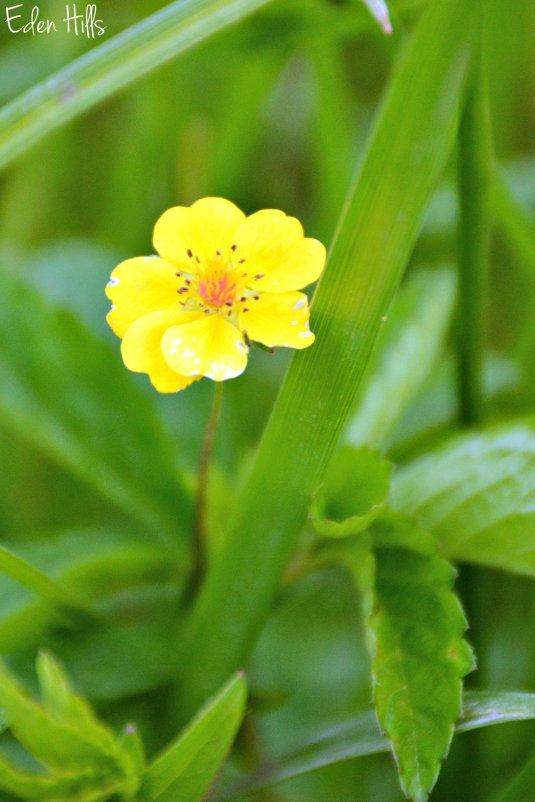 Flower_0993ew